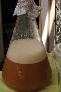 Flask of fresh yeast